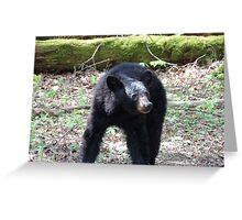 The Black Bear Greeting Card