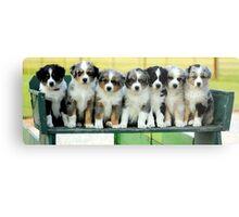 Australian Shepherd Puppies Watercolor Metal Print