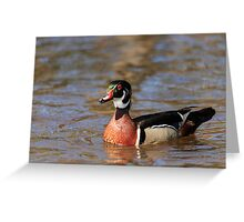Wood duck glides on the water Greeting Card