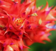 Red Spikes Flower by Alison Hindenlang