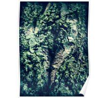 Silver Birch and Lichen  Poster