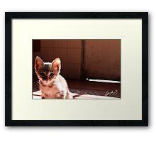 Emy Kitty Framed Print