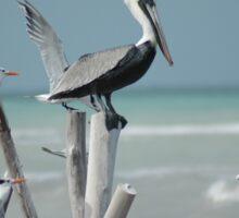 Pelican Perch Sticker