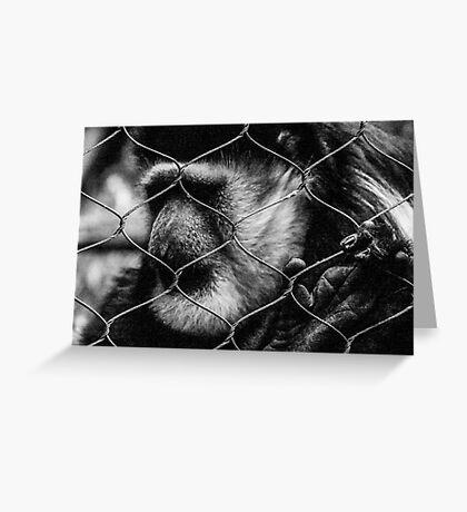 Captive Greeting Card