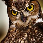 Great Horned Owl with yellow eyes by damhotpepper