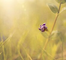 Little Flower by MS-Photographie