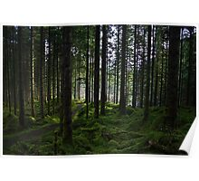 Wooded Glen Poster