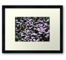 Lavender Layer Framed Print