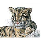 Clouded Leopard - Nebelparder by Nicole Zeug