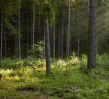 Morning in the Forest by leonkoenig