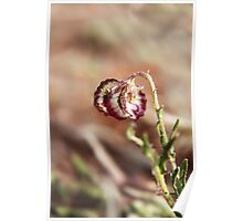 Free State Wildflower Beauty... South-Africa Poster