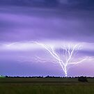 AMAZING Anvil Lightning Creepy Crawlers by Bo Insogna