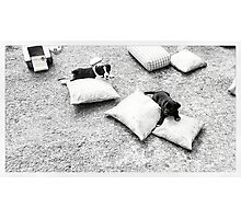 Puppies Outside Photographic Print