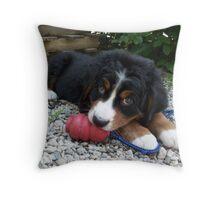 Bernese Mountain Dog Pup Throw Pillow