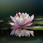 LOTUS MEDITATION by RosaCobos