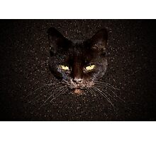 Chocolate cat Photographic Print