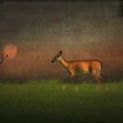 Wildlife At Sunset by TOM YORK