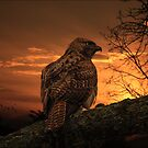 WAITING FOR PREY by TOM YORK