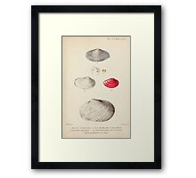 Proceedings of the Zoological Society of London 1848 - 1860 V5 Mollusca 006 Framed Print