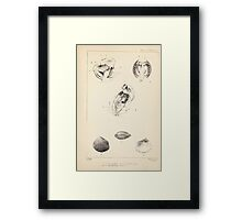 Proceedings of the Zoological Society of London 1848 - 1860 V5 Mollusca 003 Framed Print
