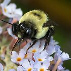 Bumble Tongue by Otto Danby II