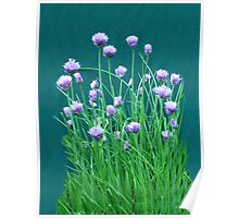 Chive Bouquet Poster