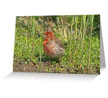 Sweety Bird Greeting Card