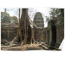 Ta Prohm, Tree #1 Poster