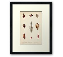 Proceedings of the Zoological Society of London 1848 - 1860 V5 Mollusca 028 Framed Print