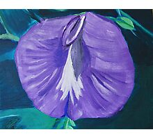 Purple and White Butterfly Pea Flower Photographic Print