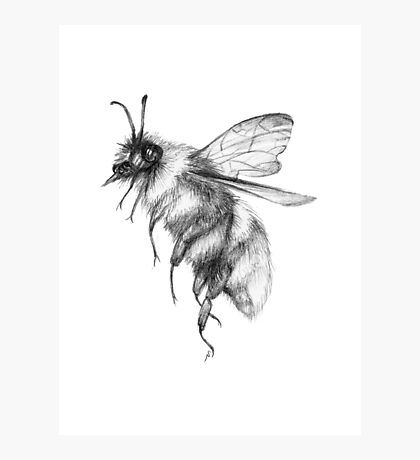 Bumblebee Sketch Photographic Print