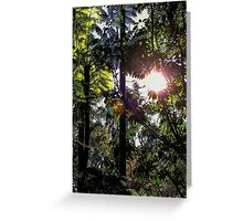 Late afternoon in the forest. Greeting Card
