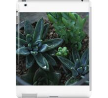 Jar of Succulents iPad Case/Skin