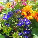 Colorful Flowers by James Brotherton
