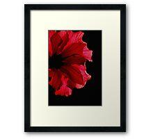 Sunbathing Hibiscus Flower Framed Print