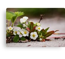 Early signs of summer Canvas Print