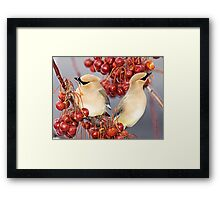 Feathers and Cherries Framed Print