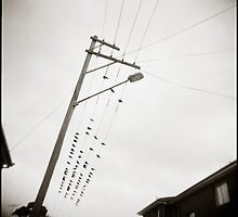{ Newtown Birds } by Lucia Fischer