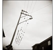 { Newtown Birds } Photographic Print