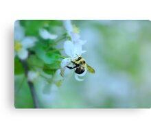 Bee & Blossom Canvas Print