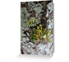 Parasite Plant Greeting Card