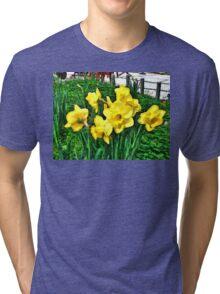 Shy Daffodils  Tri-blend T-Shirt