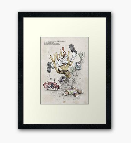 Real Life SpongeBob - Natural History Variant Framed Print