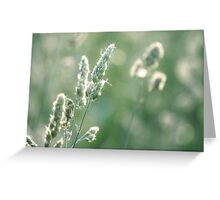 Sunset on Orchard Grass Greeting Card