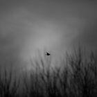 As the crow flies by DerekMacKinnon