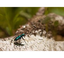 green bug Photographic Print