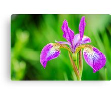 Poetic Purple Flower Canvas Print