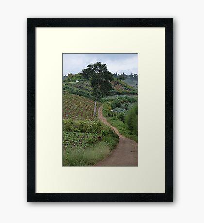 vegetable farm Framed Print