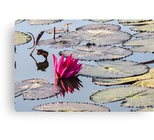 Reflection of Lotus Canvas Print