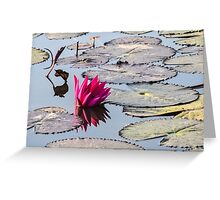 Reflection of Lotus Greeting Card